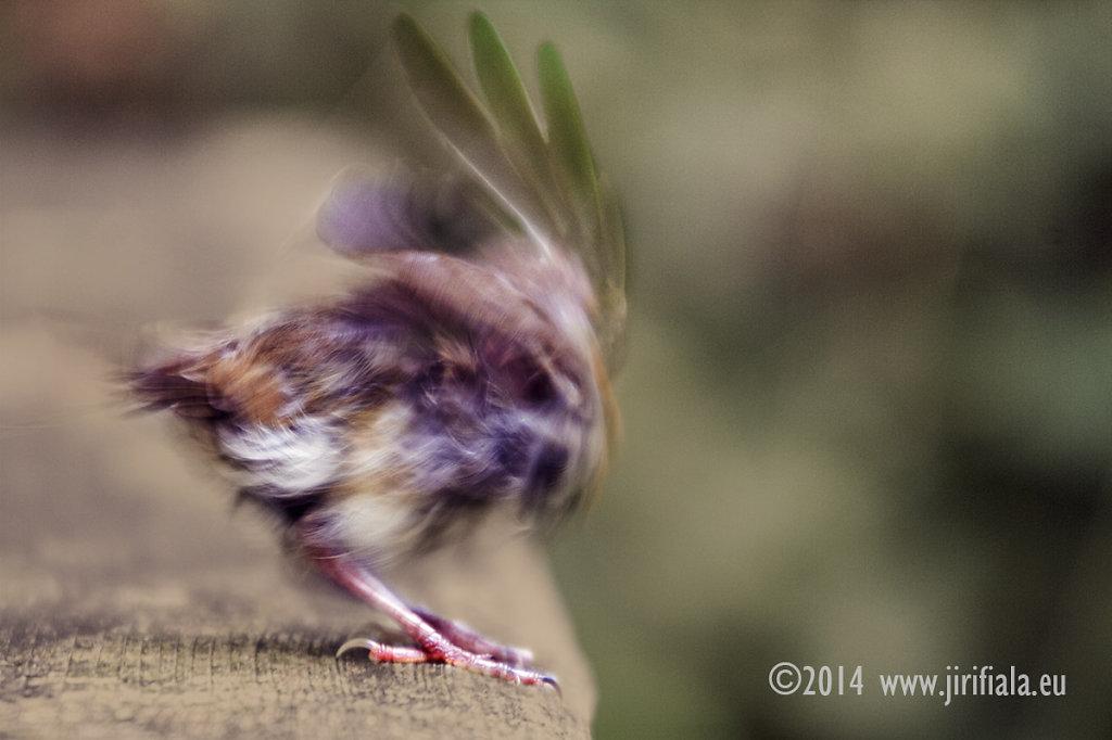 Ptacek.jpg